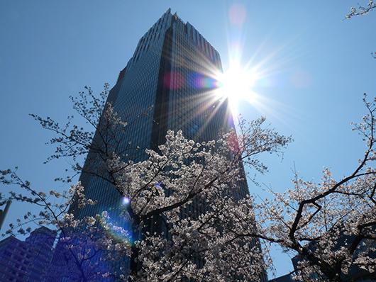 ミッド桜.jpg