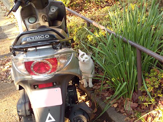 ミッド猫1.jpg