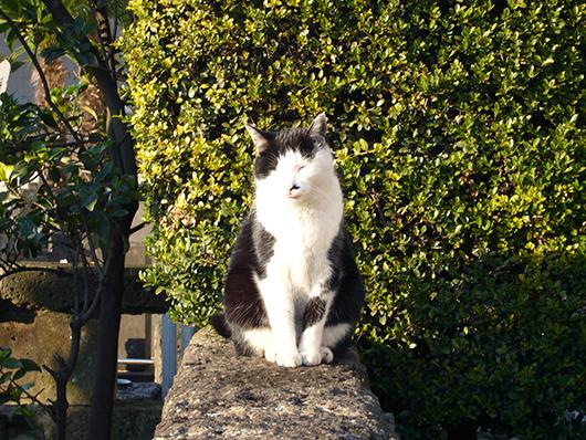 ミッド猫2.jpg