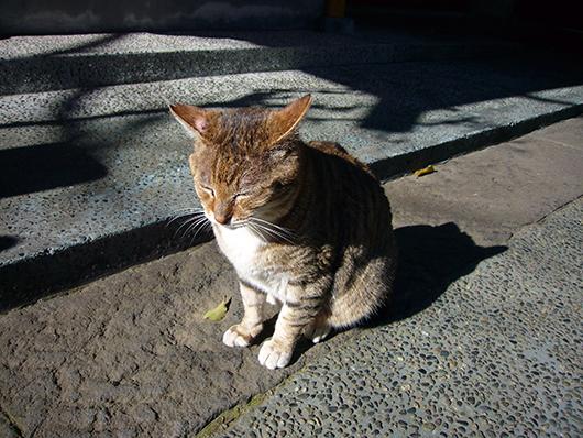 ミッド猫3.jpg