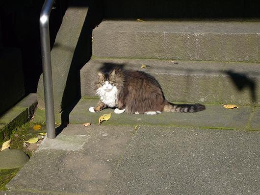 ミッド猫5.jpg