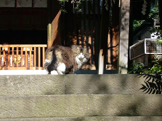 ミッド猫6.jpg